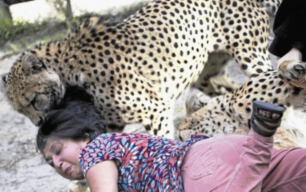 Woman Attacked by Cheetah