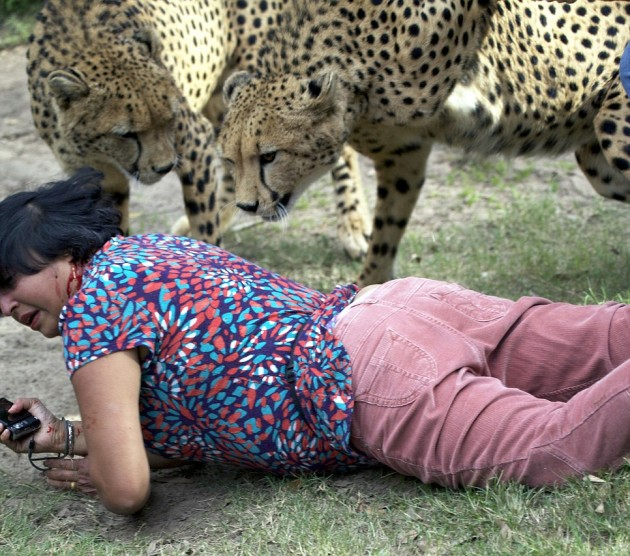 cheetah attack 3