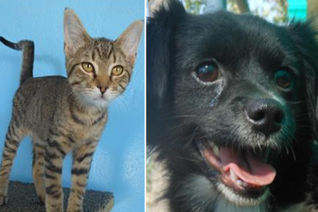 Macho and LadyBug - Human Society Pets of the Week