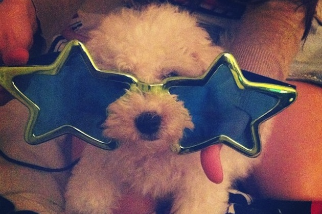 Dog with new year's glasses