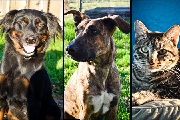 Humane Society of Wichita Falls - Adopt a Pet