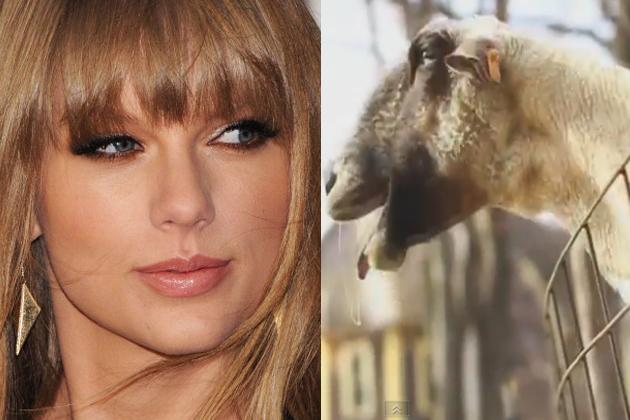 Taylor-Swift---Goat