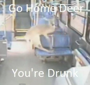 Deer goes through bus windshield