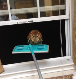 the creepiest owl eyes ever