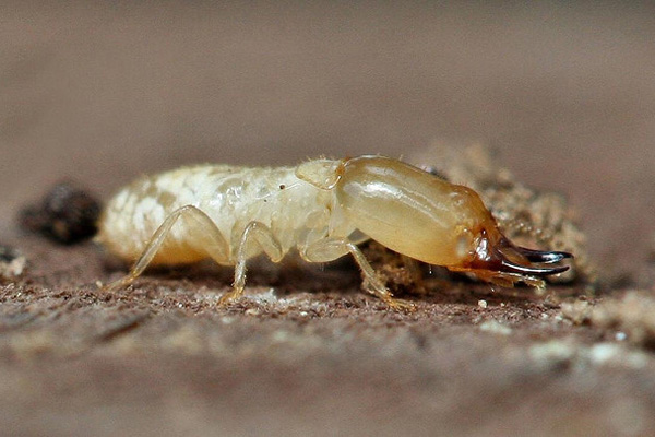 Termites Devour Millions Worth of Indian Rupees