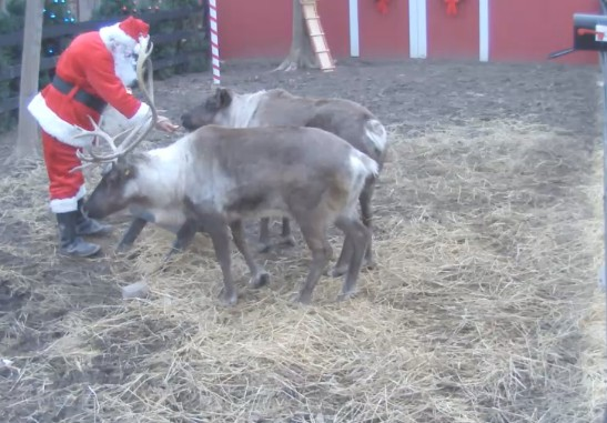 Santa Feeding the Reindeer
