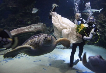 Underwater Wedding (Getty)