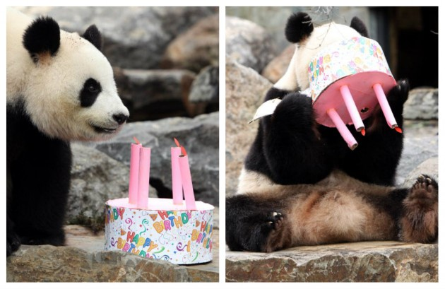 Birthday Panda (Getty)