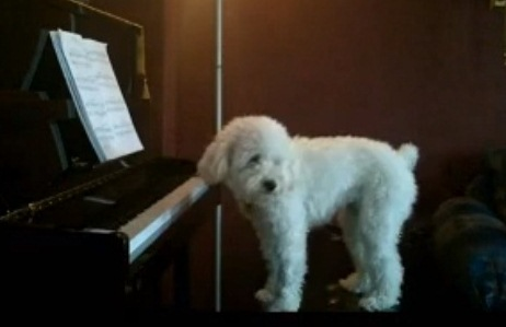 Dog & Piano (Facebook)