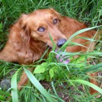 salty dog in grass