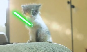 jedi kitty