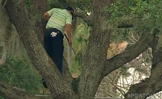 sergio garcia's amazing tree shot