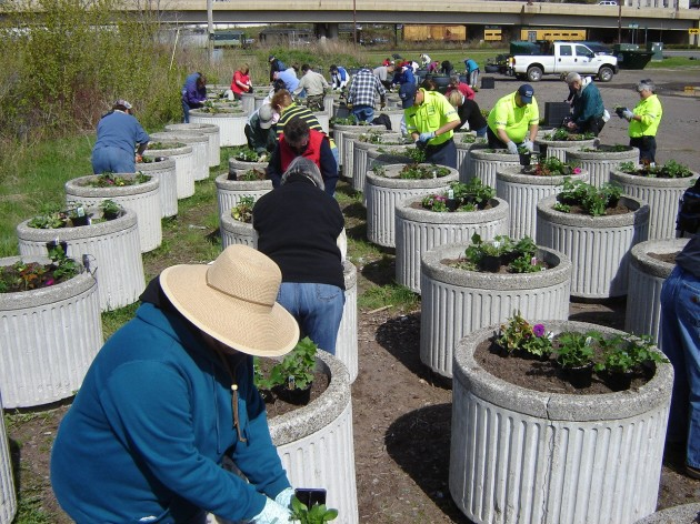 planting flowers with the greater downtown council