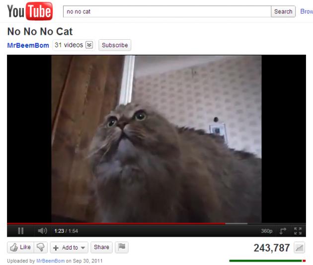 No No No Cat - YouTube