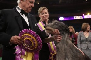 Hickory the Scottish Deerhound takes home the big prize at Westminster!