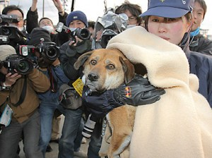 Dog is rescued after being stranded at sea following Japanese tsunami!