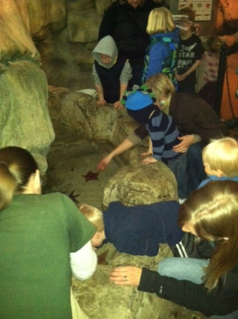 Kids enjoying the aquatic touch tank at the John Ball Zoo