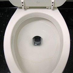 Cell users most often drop their phones in the toilet!