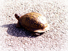 Turtles slow down air traffic at New York airport!