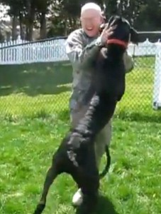 Military man reunites with family dog!