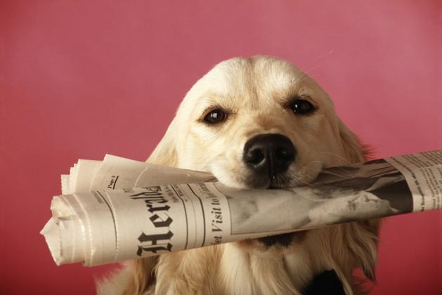 Dog holding newspaper, close-up
