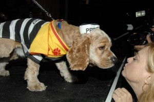 8th Annual Animal Fair Magazine Halloween Pet Costume Party