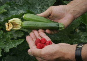 Demand For Allotments Soars