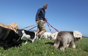 San Francisco Seeks To License Professional Dog Walkers