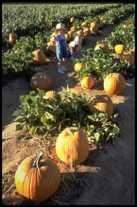 Green Acres Pumpkin Patch