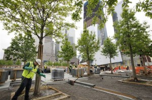 Arborist maintains trees at 9/11 Memorial