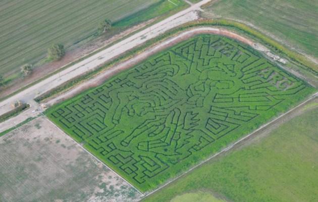 Green Acres Corn Maze