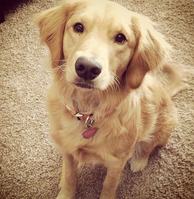 Lucy - Winner Of Casper's 2013 'Scoop The Poop' Mascot Contest