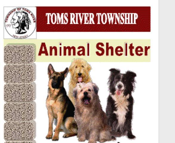 Toms River Animal Shelter
