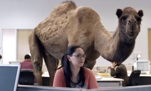 GEICO Hump Day Camel