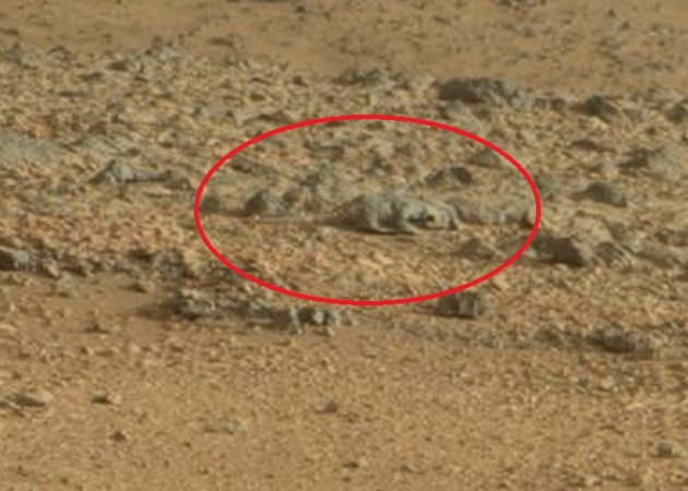 nasa mars lizard-#main