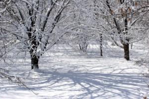 Portales Schools Cancellations