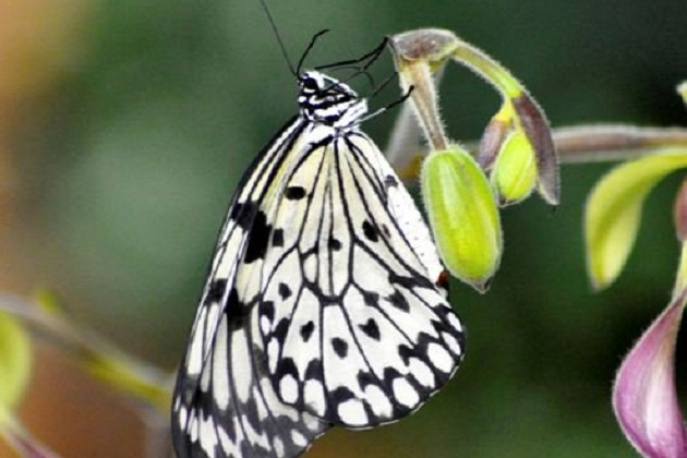 butterfly exhibit opens at frederik meijer gardens on thursday