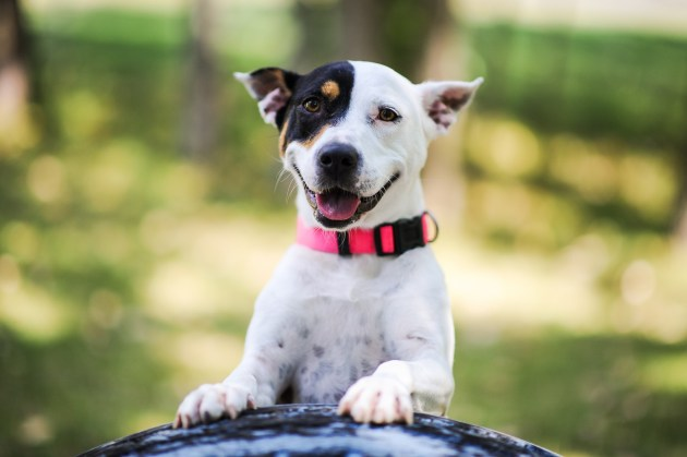 Humane Society Dog Adoption Price