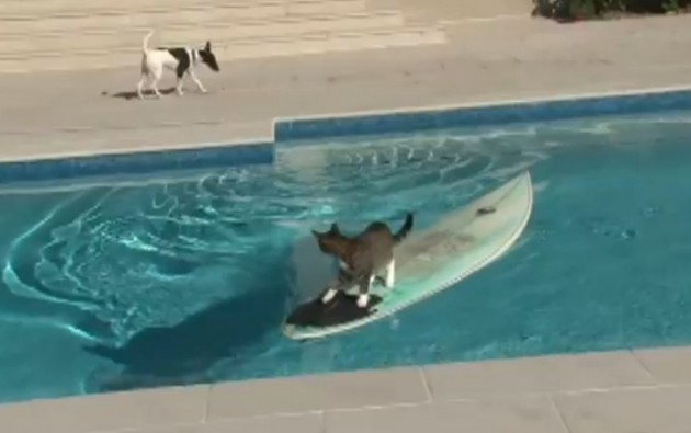 Funny Video: Cat Escapes Dog by Surfing