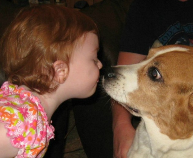Unique Facts About Dogs Can Dog Licking Your Face Make